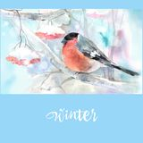 Winter in the wood. Little bird on branch, bullfinch royalty free illustration