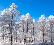 Winter wooden landscape Royalty Free Stock Photography