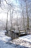 Winter woodland. Winter in worsley woods Stock Photo