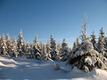 Winter woodland. A winter woodland and blue sky royalty free stock images