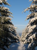 Winter woodland. A winter woodland and a blue sky royalty free stock photos