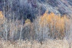 Winter woodland background Stock Images