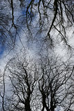 Winter Woodland Canopy Royalty Free Stock Photography