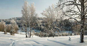 Free Winter Woodland Panorama With Bare Trees In Hoar Stock Image - 89196921