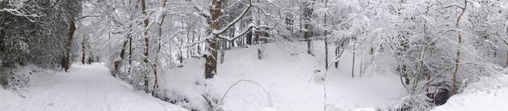 Winter woodland panoramic Royalty Free Stock Photos