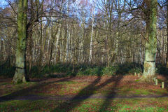 A winter woodland scene Stock Images