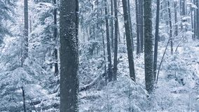 Winter Woodland With Snow Falling