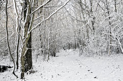 Winter woodland snow Royalty Free Stock Photography