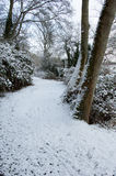 Winter woodland in snow Royalty Free Stock Image