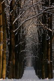 Winter woods. A snowy boulevard in the woods during wintertime Royalty Free Stock Images