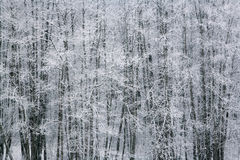 Winter by the woods 2 Royalty Free Stock Photo