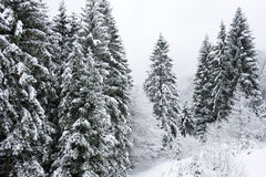 Winter Woods Royalty Free Stock Photos