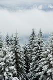 Winter Woods Stock Image