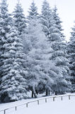 Winter Woods Royalty Free Stock Photo