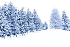 Winter Woods. Beautiful winter landscape with trees covered in snow Stock Image