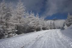 Winter in the woods. Winter road in the forest Royalty Free Stock Photo