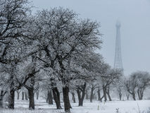 Winter woods. Winter trees and Eiffel tower replica royalty free stock photography