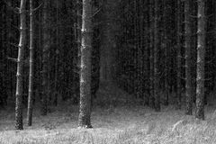 Winter in the Woods Royalty Free Stock Images