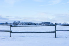 Winter woods on a background. wooden fence Stock Images