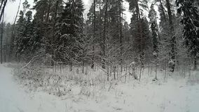 Winter woods stock footage