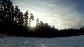Winter woods stock video