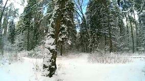 Winter woods stock video footage