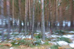 Winter Woods Blur Stock Image
