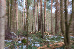 Winter Woods Blur Stock Photography