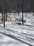 Winter woods Royalty Free Stock Images
