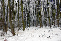 Winter in the woods Stock Image