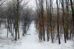 Winter in the woods Stock Images