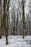 Winter in the woods Royalty Free Stock Image