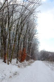 Winter in the woods Royalty Free Stock Photos