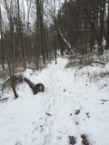 Winter woods Stock Photo