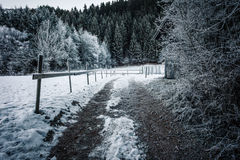 Winter in the woods Stock Photography