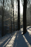 Winter in the woods Royalty Free Stock Photo