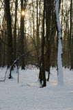 Winter in the woods Royalty Free Stock Photography