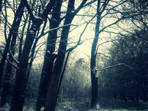 Winter woods. Shot taken while in woods Stock Images
