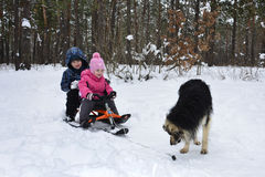 Winter in the woods on a sled, and kids are sitting next to the Royalty Free Stock Photography
