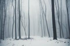 Winter woods snow. Snow fallen in winter woods with fog Stock Image