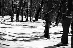 Winter in woods with snow Royalty Free Stock Photography