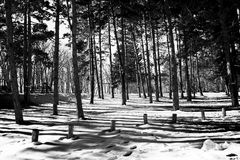 Winter in woods with snow Royalty Free Stock Photo