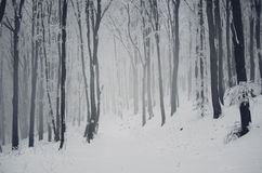 Winter woods with snow royalty free stock image