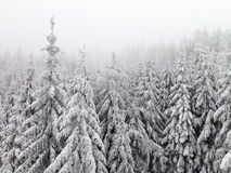 Winter Woods Royalty Free Stock Photography