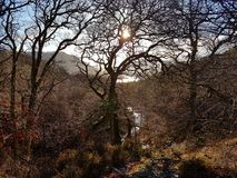 Landscape of winter woods and river, Aira Force, lake district royalty free stock image