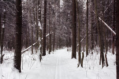In the winter woods Royalty Free Stock Photography