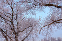 Winter in woods Royalty Free Stock Photography