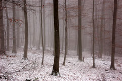 Winter woood mit Nebel Lizenzfreies Stockbild