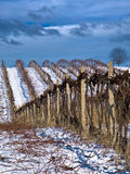 Winter work in vineyard. With dramatic sky Stock Photo