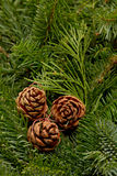 Winter wreath background Royalty Free Stock Images